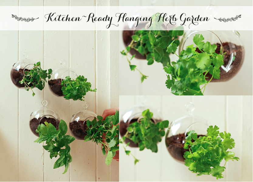 Kitchen ready hanging herb garden monica potter for Kitchen herb garden