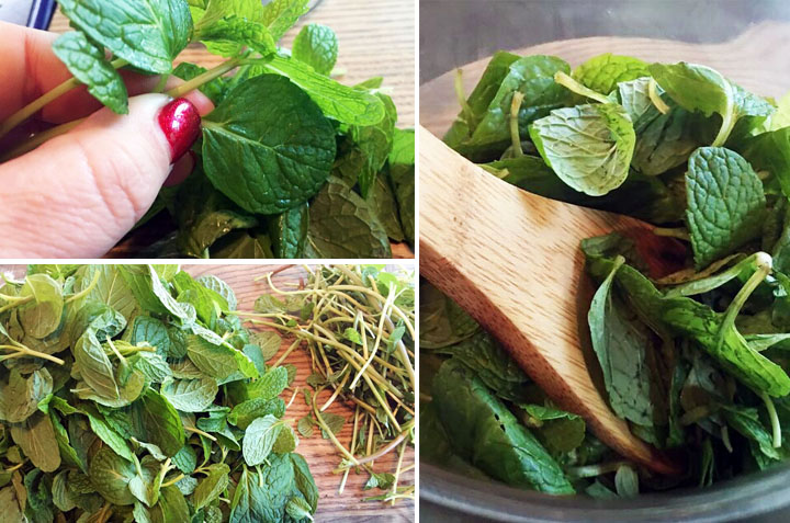 mint, mint extract, monica potter, monica potter home, diy, garden, plant, vodka, cooking